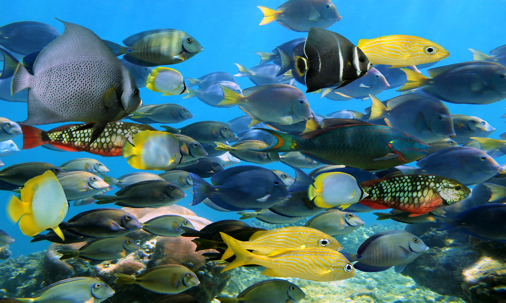 Marinefishez saltwater fish store atlanta online for Salt water fish store