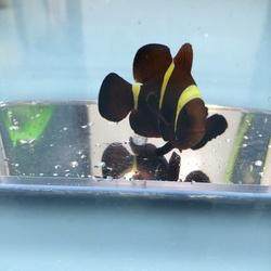 MarineFishEZ | Healthy Hand Selected Saltwater Fish Online