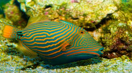 Marinefishez saltwater fish store online atlanta for Salt water fish stores