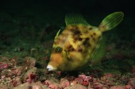 shutterstock_filefish