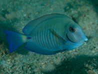 shutterstock_doctorfish3