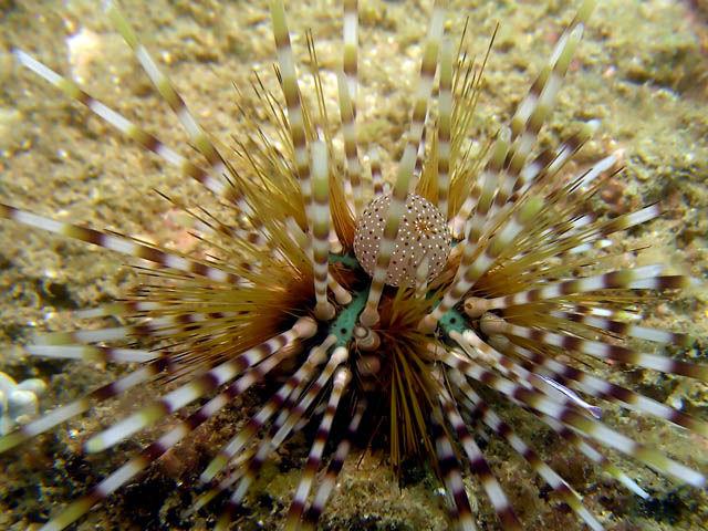 Starfish / Urchin : Ze...